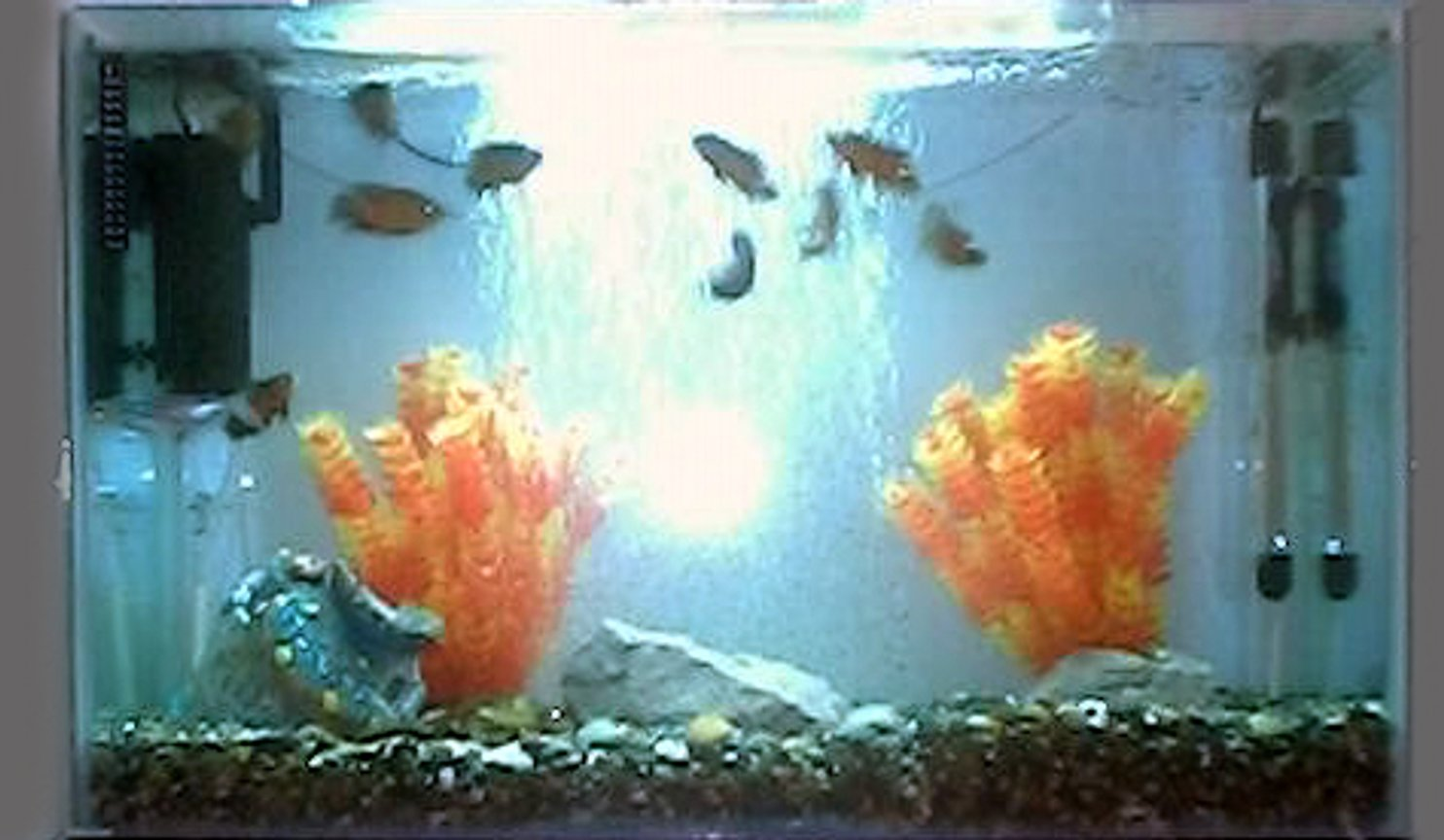 35 gallons freshwater fish tank (mostly fish and non-living decorations) - 10 Oscars, one catfish, one loach,