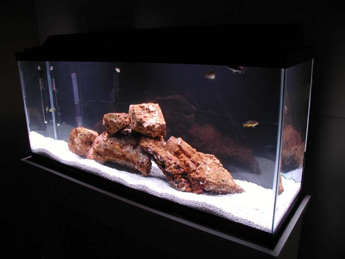 55 gallons freshwater fish tank (mostly fish and non-living decorations) - 55 gal, homemade stand