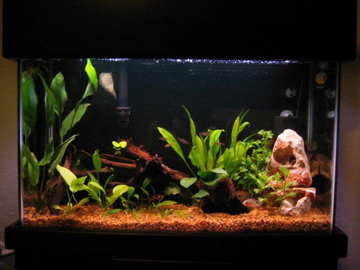freshwater fish tank (mostly fish and non-living decorations) - 29 gal Emperor 330 Marineland powerhead w/ 3 Undergravel jets Visi-thermal 100 watt heater Lightly planted (more comming shortly) 1 betta 1 cory 7 glo lite tetras