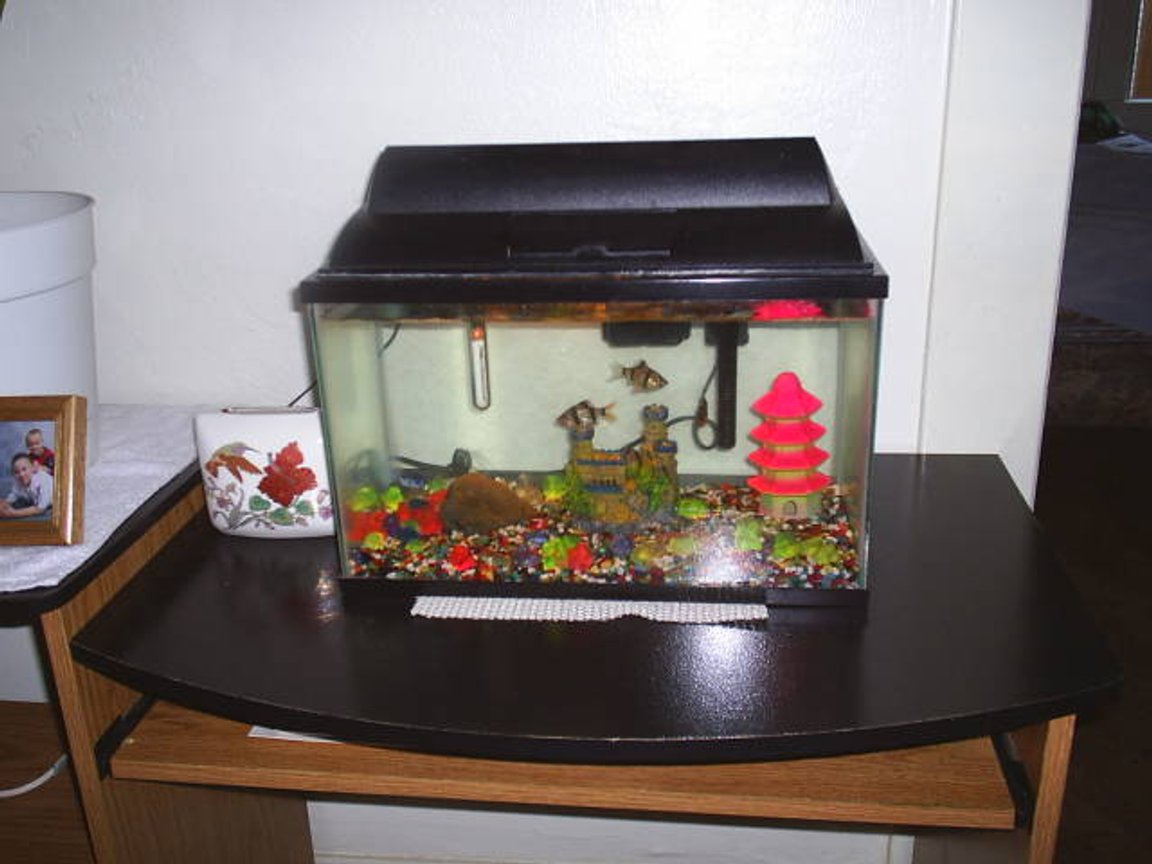 freshwater fish tank (mostly fish and non-living decorations) - I have Four fresh Water fish tanks, and I really enjoy all that I do with them. I have Chiclids, Angel Fish, Tertras, Tiger Barbs, Catfish, Upside Down swimming catfish, a Bass, Pleacatmous