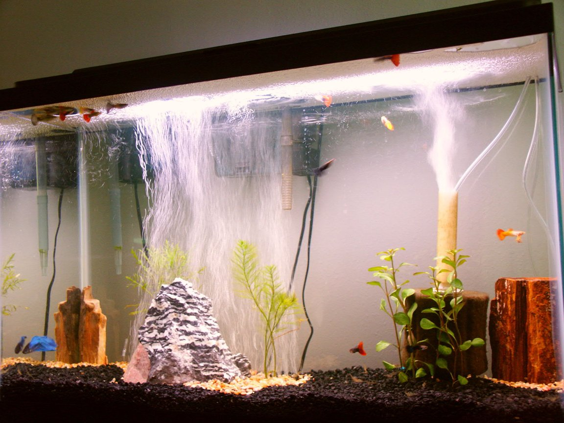 freshwater fish tank (mostly fish and non-living decorations) - This tank is 29 gallons, there are about 15 male guppies (various strains), and one (I couldn't resist) beta. This is my first tank, so please be kind :)