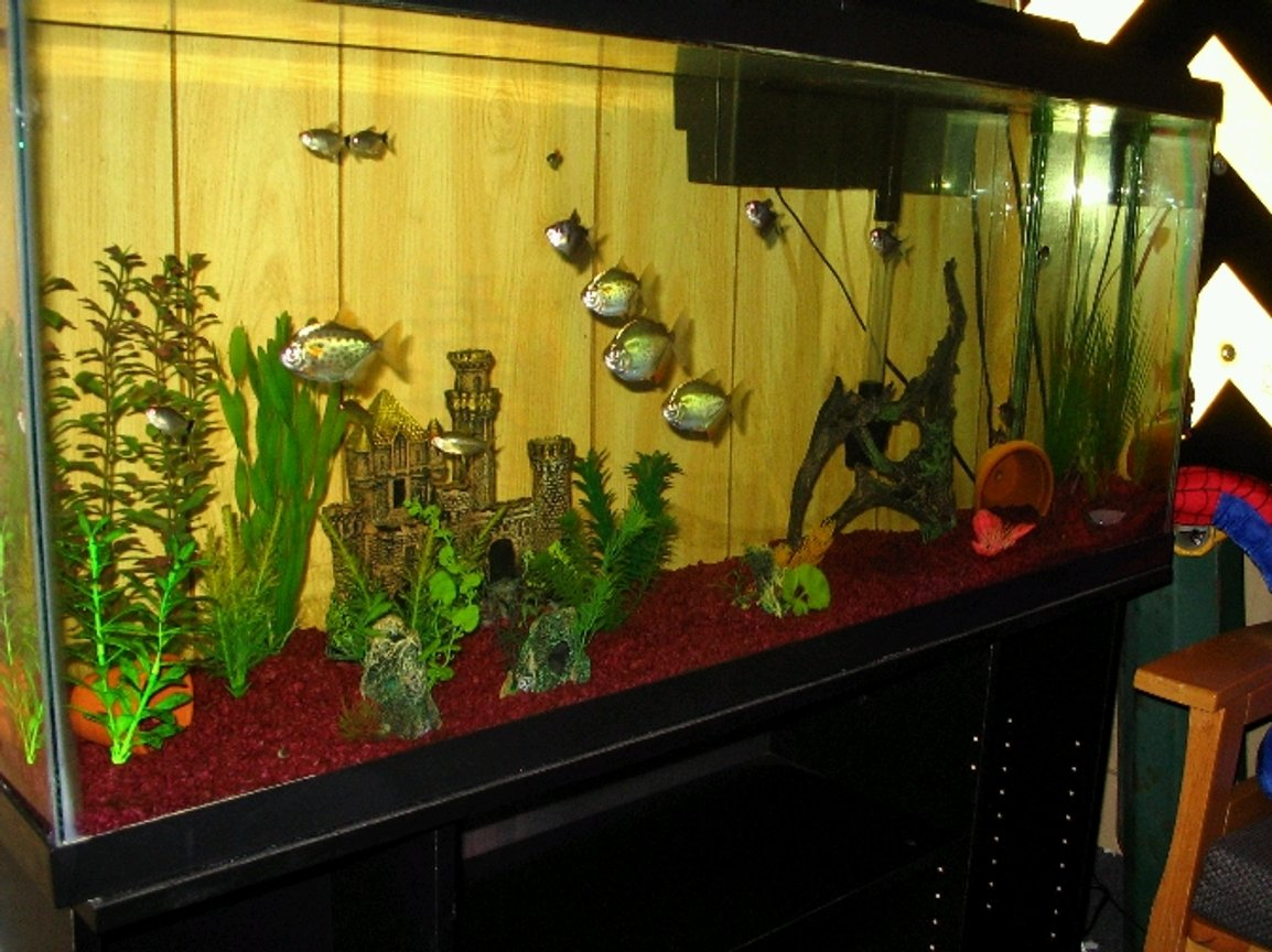 freshwater fish tank (mostly fish and non-living decorations) - 55 gallon.