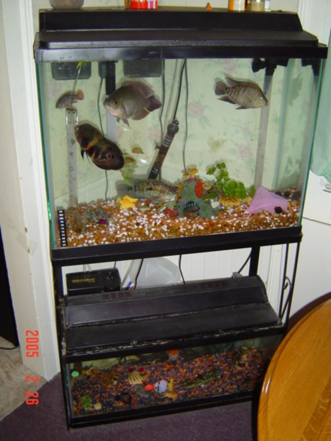 freshwater fish tank (mostly fish and non-living decorations)