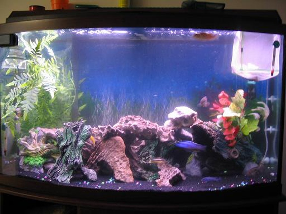 46 gallons freshwater fish tank (mostly fish and non-living decorations)