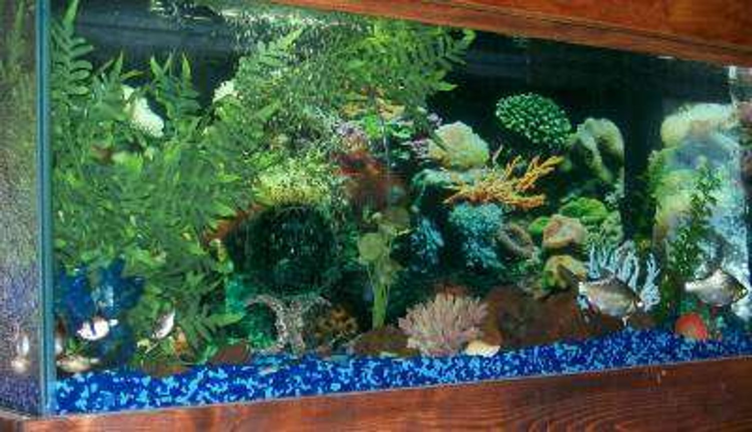 40 gallons freshwater fish tank (mostly fish and non-living decorations) - 40 gal, fake plants and coral