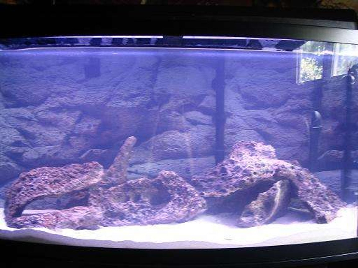 46 gallons freshwater fish tank (mostly fish and non-living decorations) - 46gallon still cycling