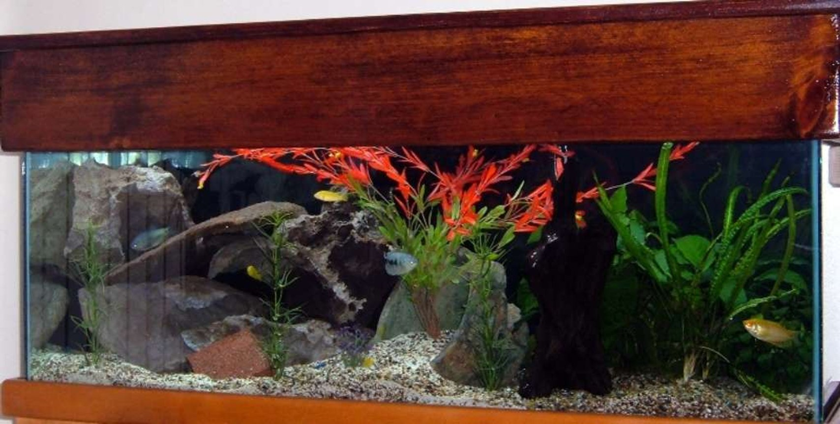 72 gallons freshwater fish tank (mostly fish and non-living decorations) - PIC 2