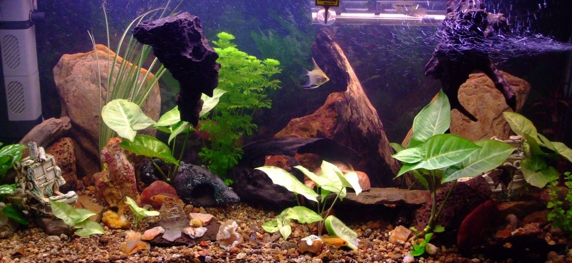 90 gallons freshwater fish tank (mostly fish and non-living decorations) - recently rearranged and a few more plants, with a variety of cichlids including 2 rainbow chichlid's, 4 bristle nose pleco's, 1 pictus catfish, 3 khuli loaches, 1 convict, 1 firemouth, 1 flameback, 3 bolivian butterfly's, 2 red forest jewel's, 1 electric yellow, 1 princess, 2 angel's, 1 sertivum, 2 blood peacocks(not sure about the name), 2 kribensis, clown loach