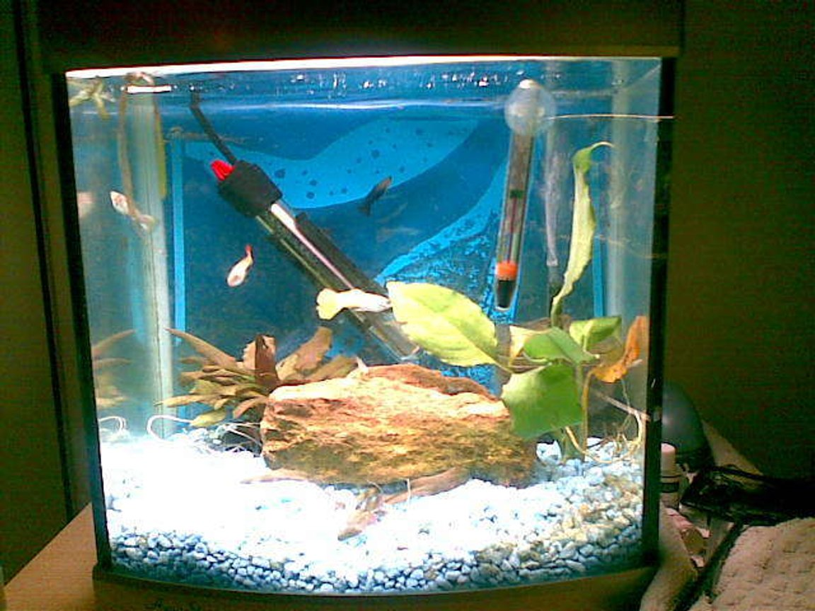50 gallons freshwater fish tank (mostly fish and non-living decorations) - this is our bithing and breeding tank