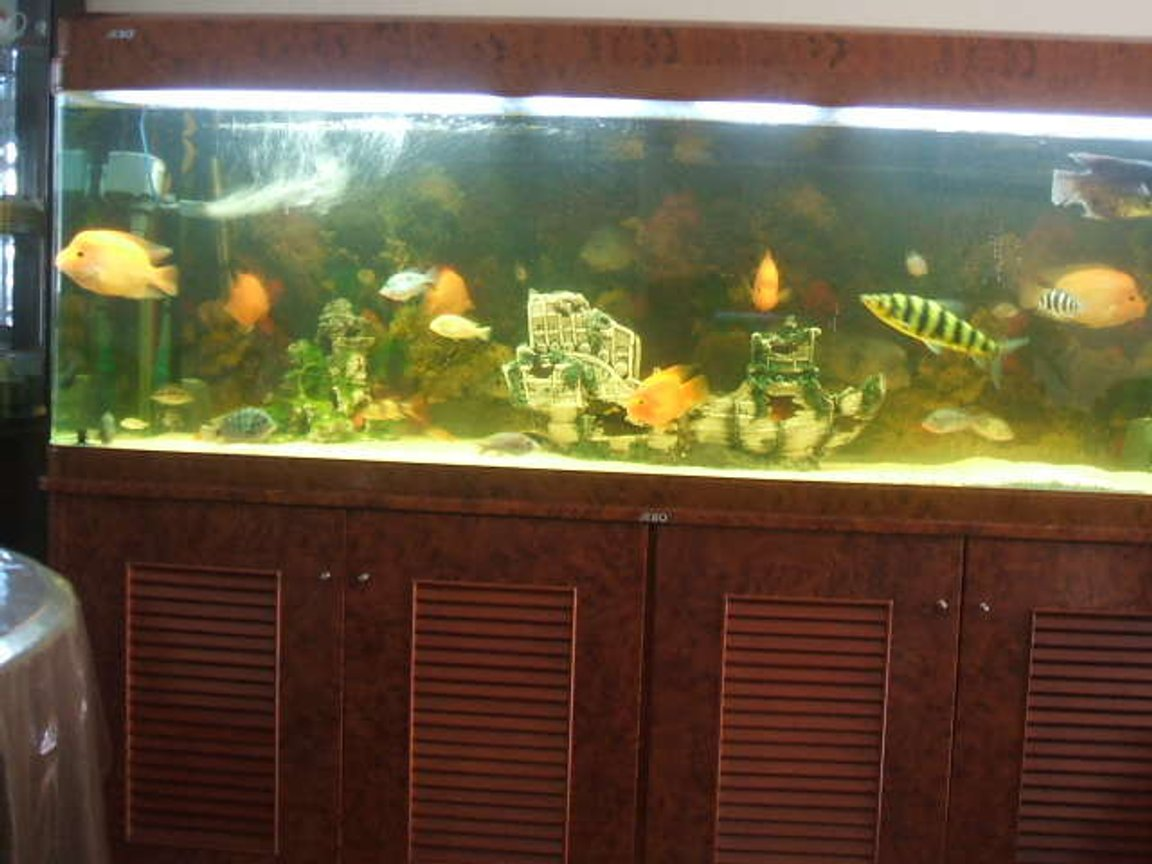 190 gallons freshwater fish tank (mostly fish and non-living decorations) - Previous fish tank
