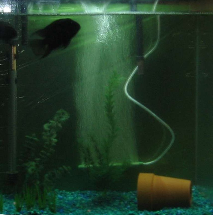 55 gallons freshwater fish tank (mostly fish and non-living decorations) - convicts