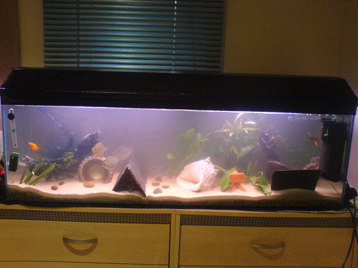 24 gallons freshwater fish tank (mostly fish and non-living decorations) - 4 ft tank 120 litres gravel then play sand sediment ready for a fire eel soon!!!! :D mostly real plants with exeption of 2 fake ones, 3 big silver dollars, red claw crayfish, 2 blue gourami, 2 dwarf gourami, big angelfish, 2 plec's, female gold molly, lonely guppy and 2 placy's (babys)