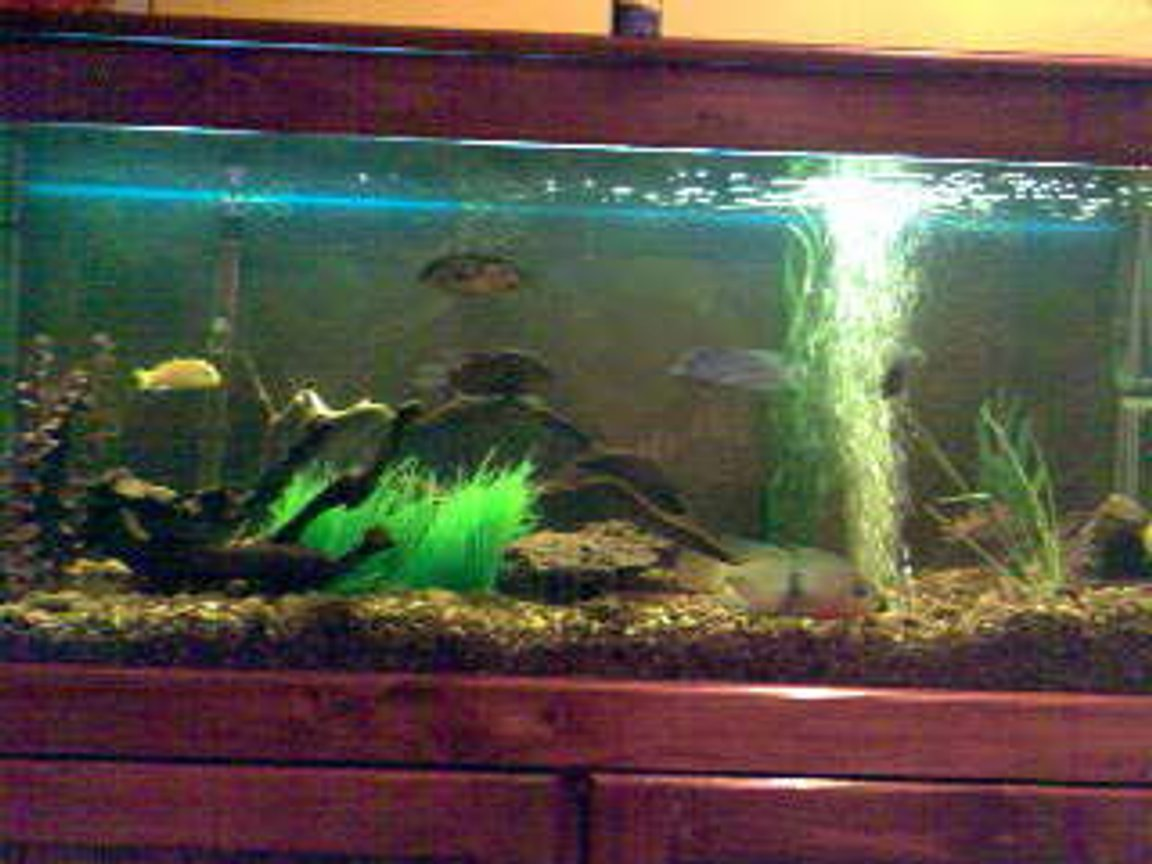 70 gallons freshwater fish tank (mostly fish and non-living decorations) - Creekish Feel
