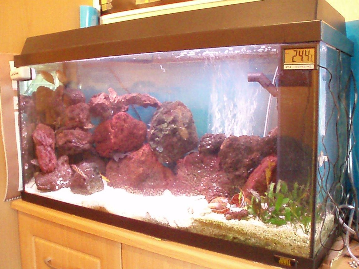 25 gallons freshwater fish tank (mostly fish and non-living decorations) - My african tank