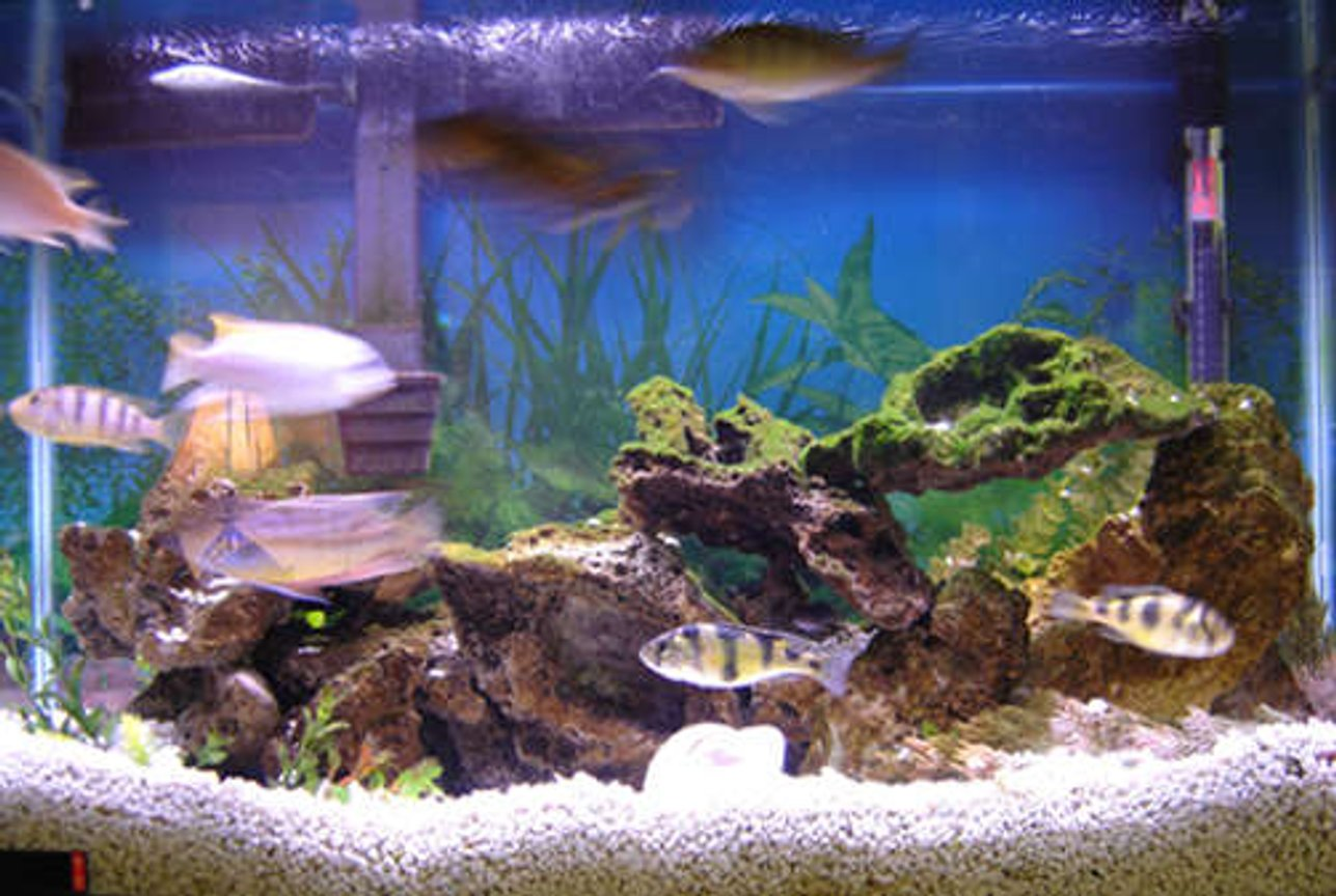 29 gallons freshwater fish tank (mostly fish and non-living decorations) - 29 Gallon African Tank