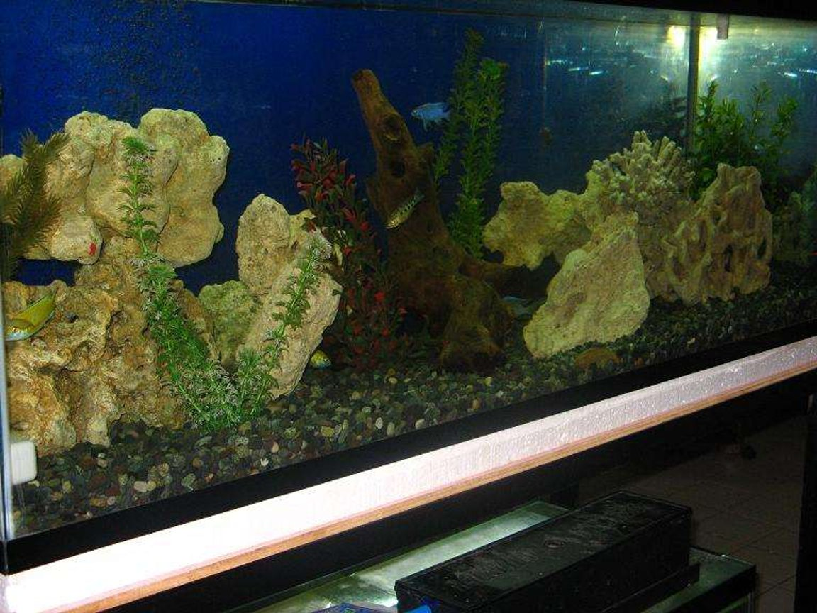 75 gallons freshwater fish tank (mostly fish and non-living decorations) - malawi cichlid tank