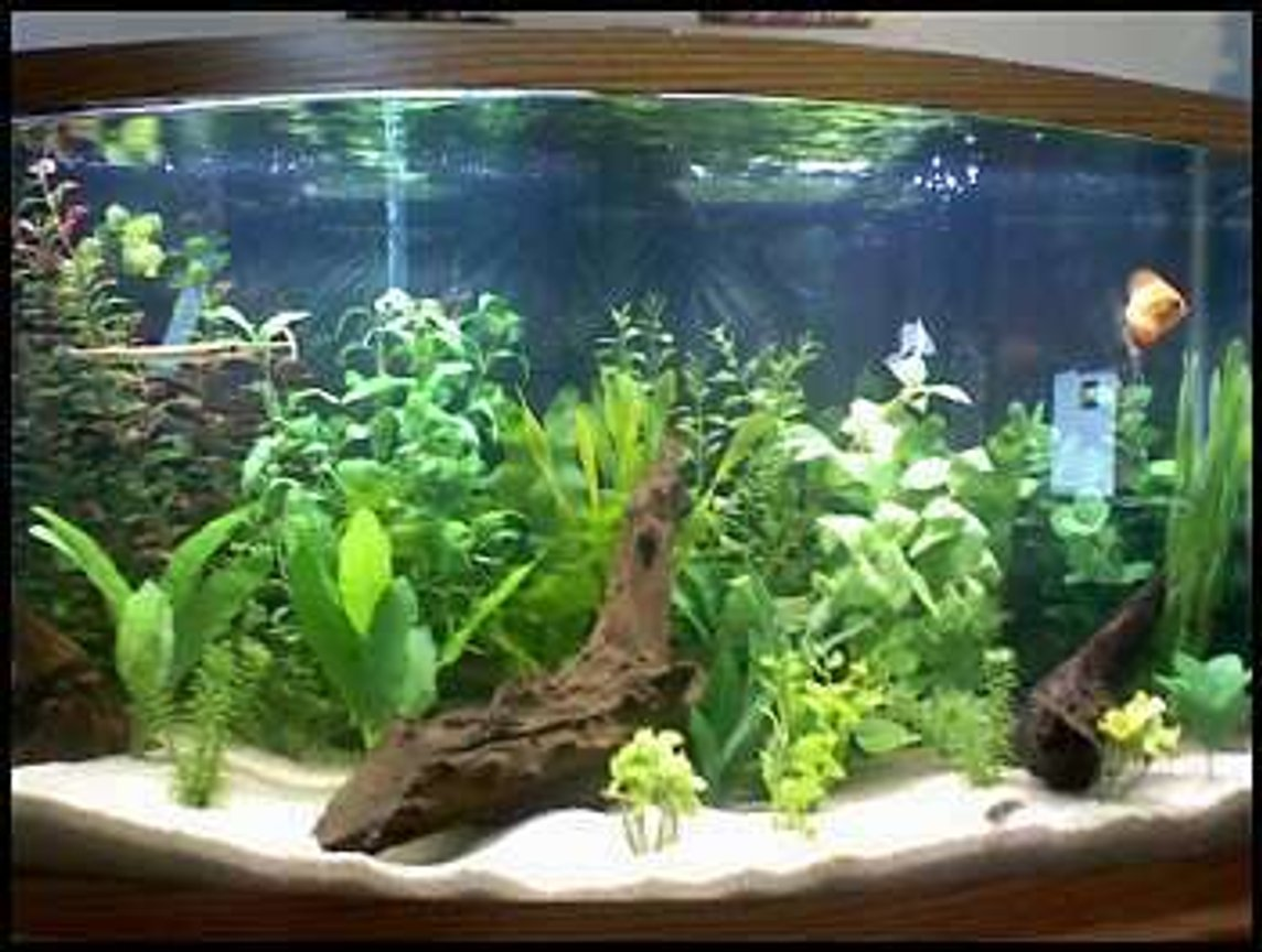 46 gallons freshwater fish tank (mostly fish and non-living decorations) - Sorry, its a camera phone.... This is my 46 gallon bow front with a wide variety of fish that are camera shy
