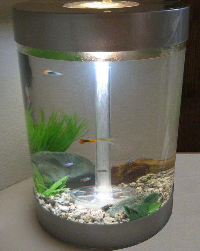 9 gallons freshwater fish tank (mostly fish and non-living decorations) - My First Fish Tank