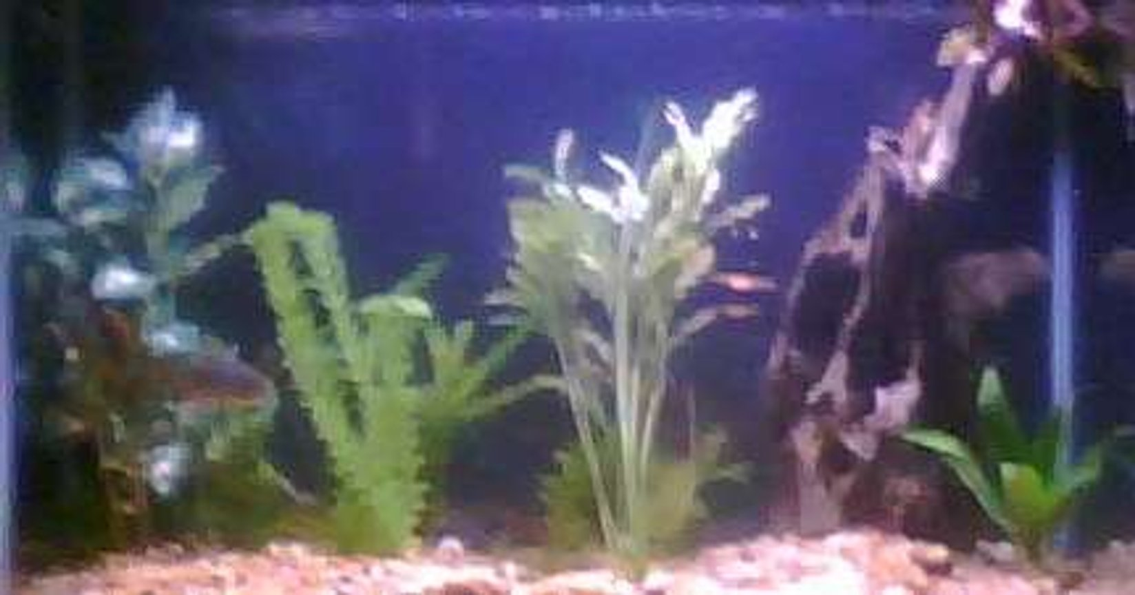 55 gallons freshwater fish tank (mostly fish and non-living decorations) - My 29 Gallon