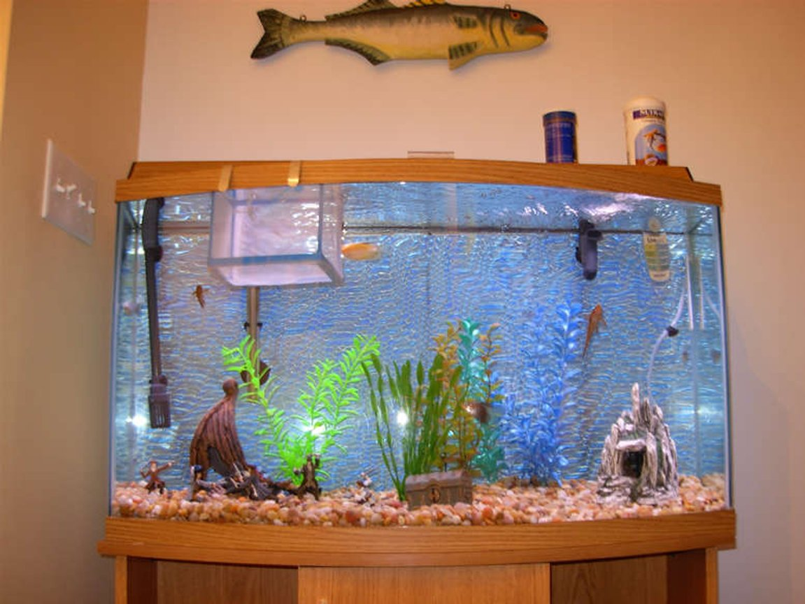 55 gallons freshwater fish tank (mostly fish and non-living decorations) - My Fishy Tank