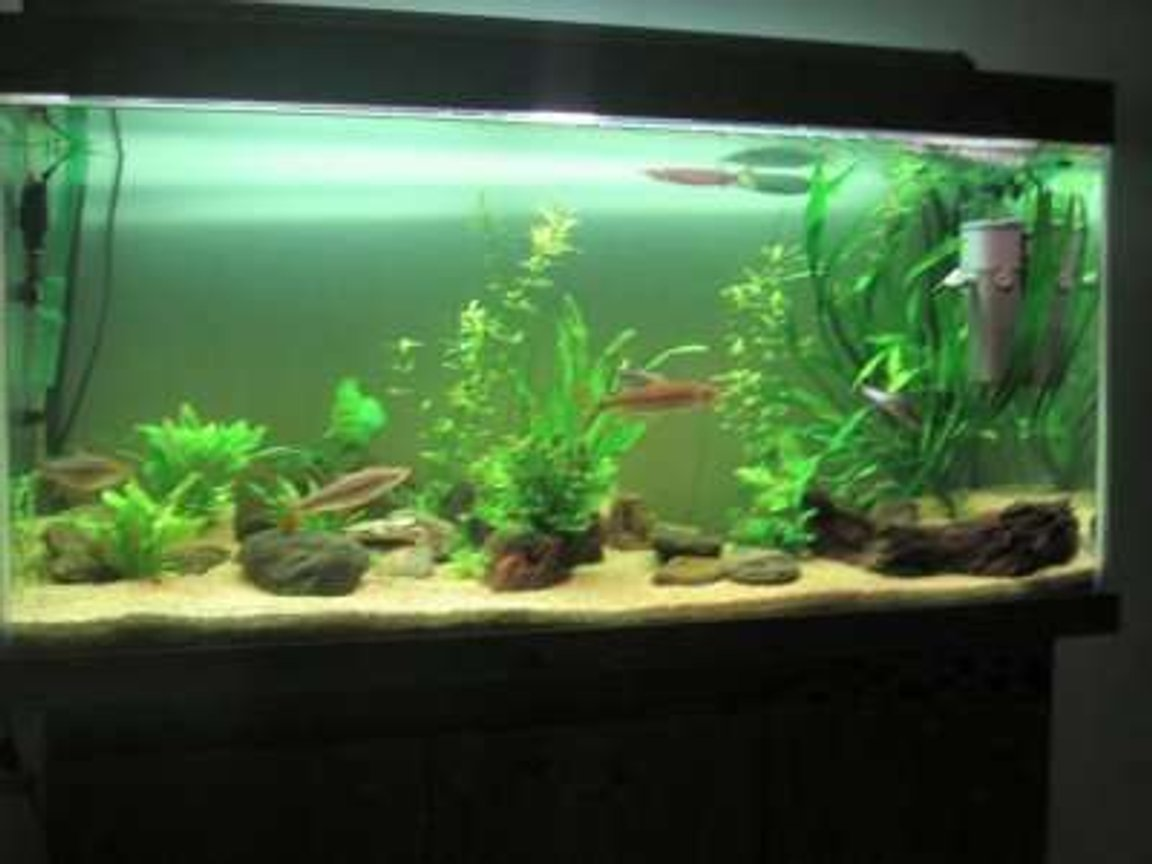 28 gallons freshwater fish tank (mostly fish and non-living decorations) - i need help abt plant n fishs