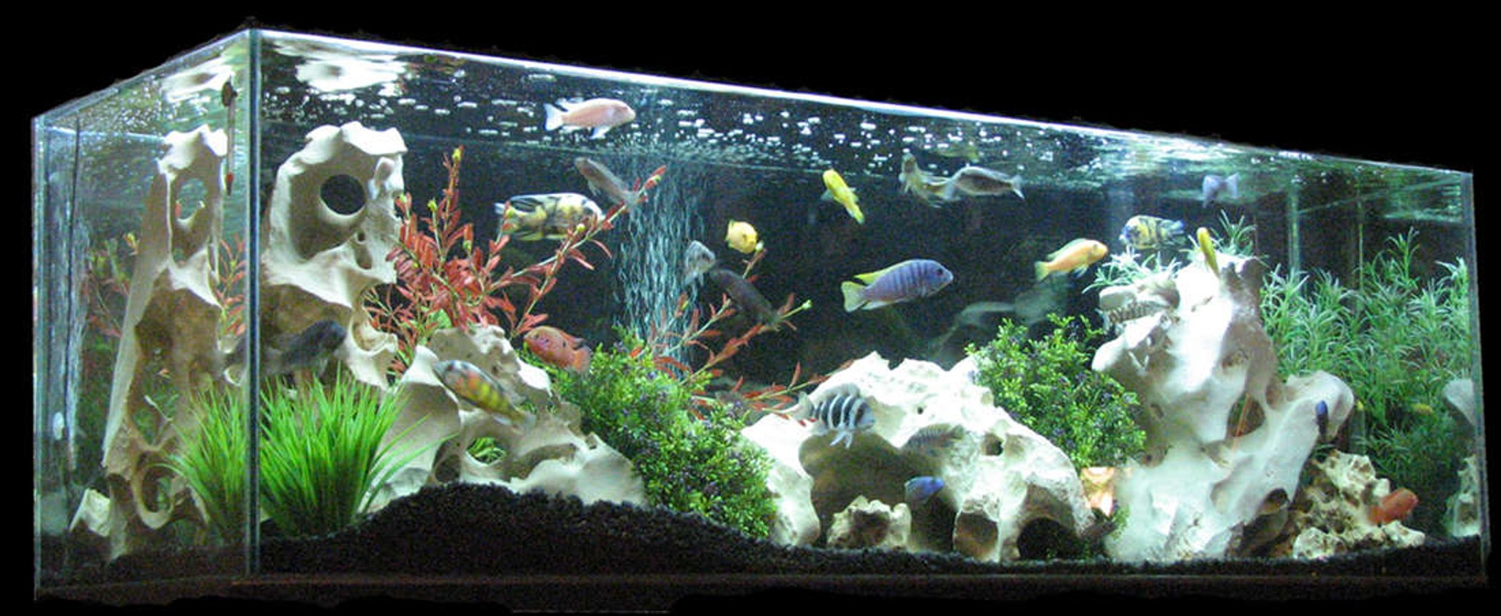 110 gallons freshwater fish tank (mostly fish and non-living decorations) - 110 Gal tank sits in my living room. I got it for a steal on Criagslist. It is 5' long and the highlight of my room. I have both a blue and white light but typically only have the white on.