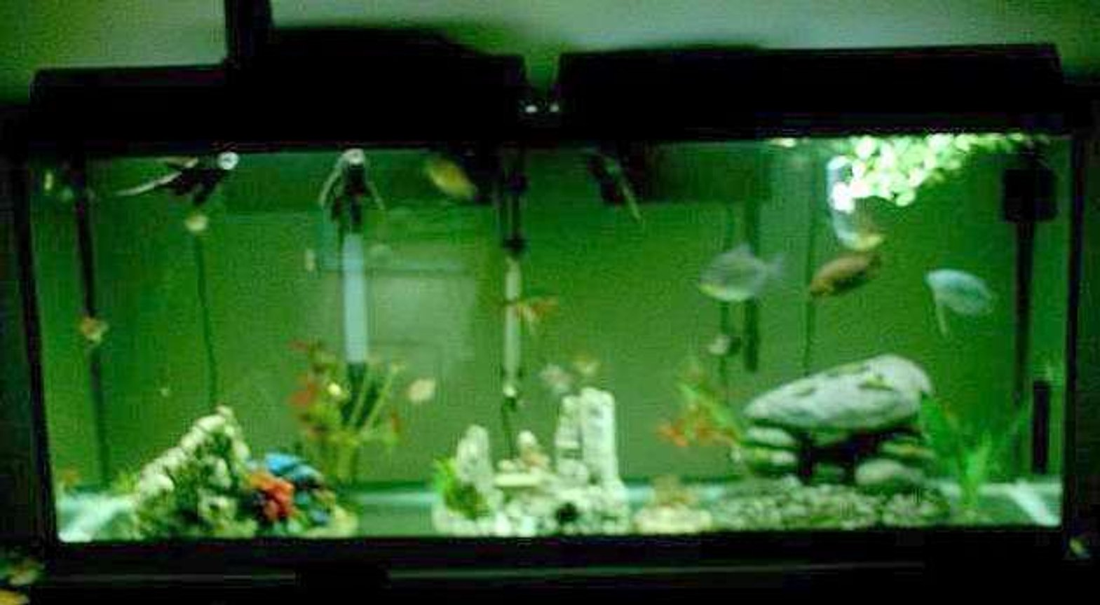 75 gallons freshwater fish tank (mostly fish and non-living decorations) - 55g freesh it's all about the fish