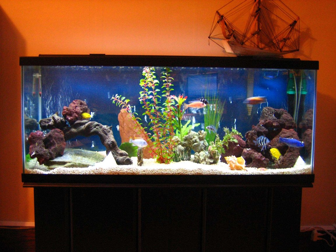 55 gallons freshwater fish tank (mostly fish and non-living decorations) - Say Hello to my Little Friends