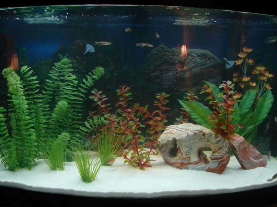 46 gallons freshwater fish tank (mostly fish and non-living decorations) - my first attempt at a large tank