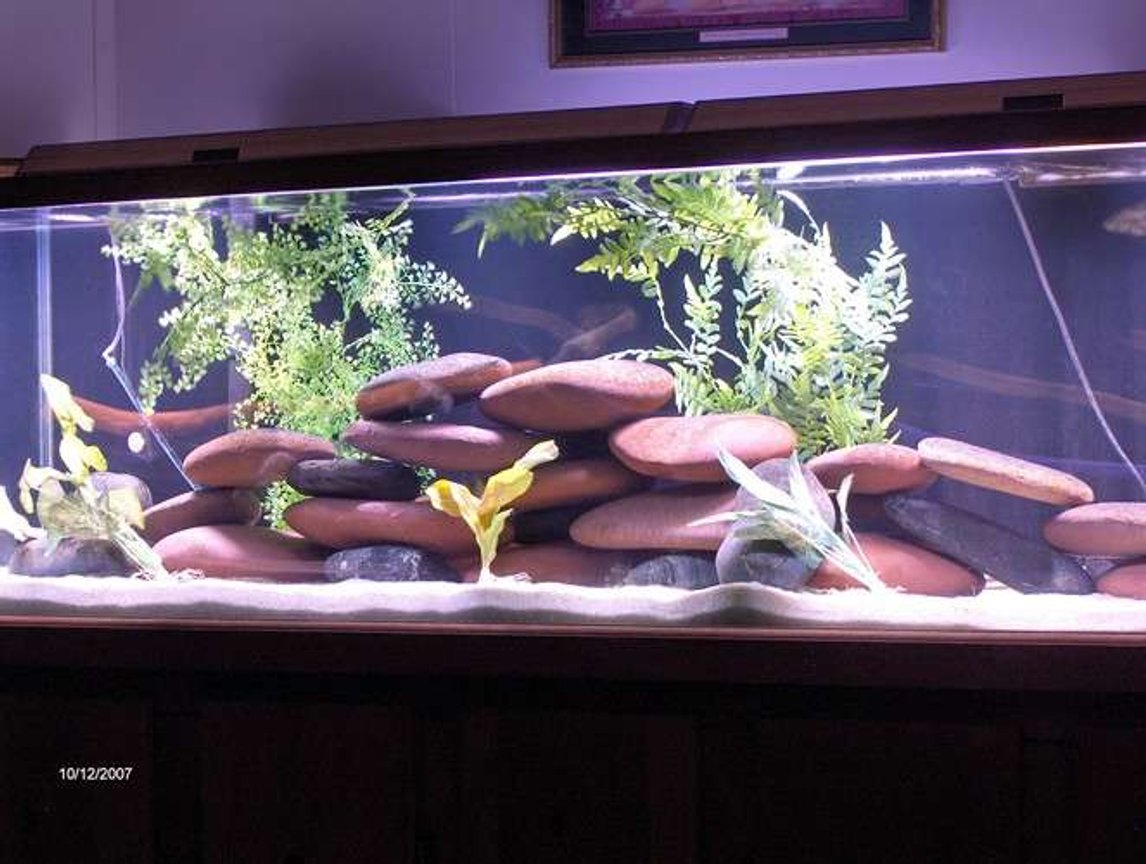 125 gallons freshwater fish tank (mostly fish and non-living decorations) - 125 gallon fish tank