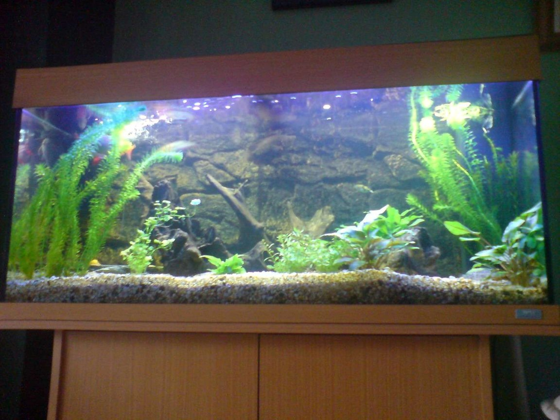 "48 gallons freshwater fish tank (mostly fish and non-living decorations) - This is my current set up, with the juwel 3d backround, mainly used fine gravel for substrate but have a ""sandpit"" in the back corner for the eel. Main peice being a lovely shaped bog wood"