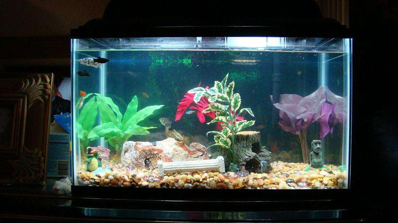 10 gallons freshwater fish tank (mostly fish and non-living decorations) - 10 gallon fish tank