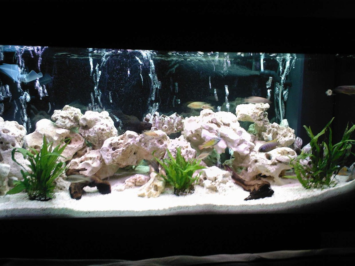 40 gallons freshwater fish tank (mostly fish and non-living decorations) - my 180L malawi tank