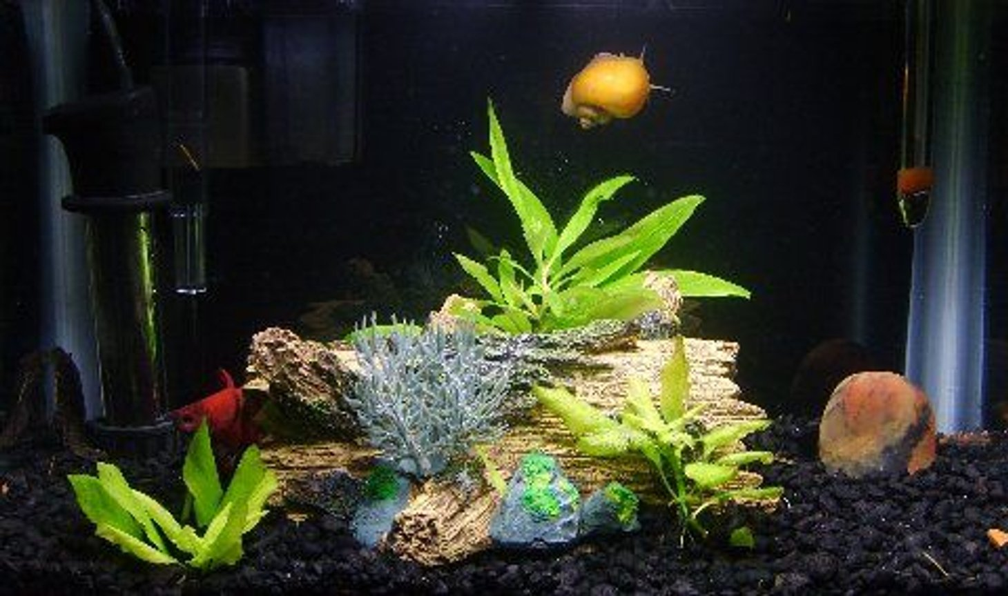 3 gallons freshwater fish tank (mostly fish and non-living decorations) - The Three Amigos