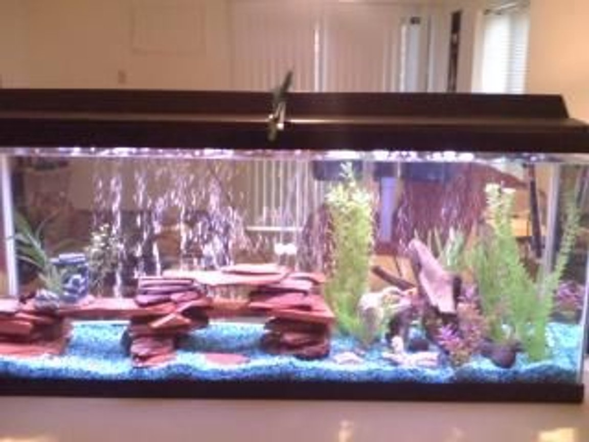 55 gallons freshwater fish tank (mostly fish and non-living decorations) - Re-arranged my tank after the last cleaning.