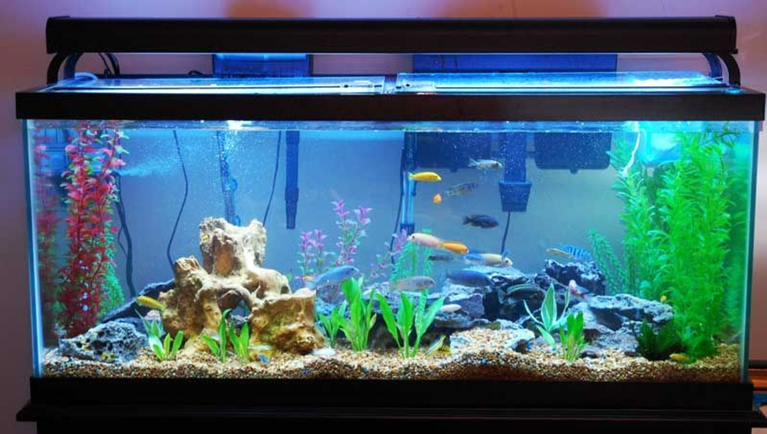 75 gallons freshwater fish tank (mostly fish and non-living decorations) - sunlight setting