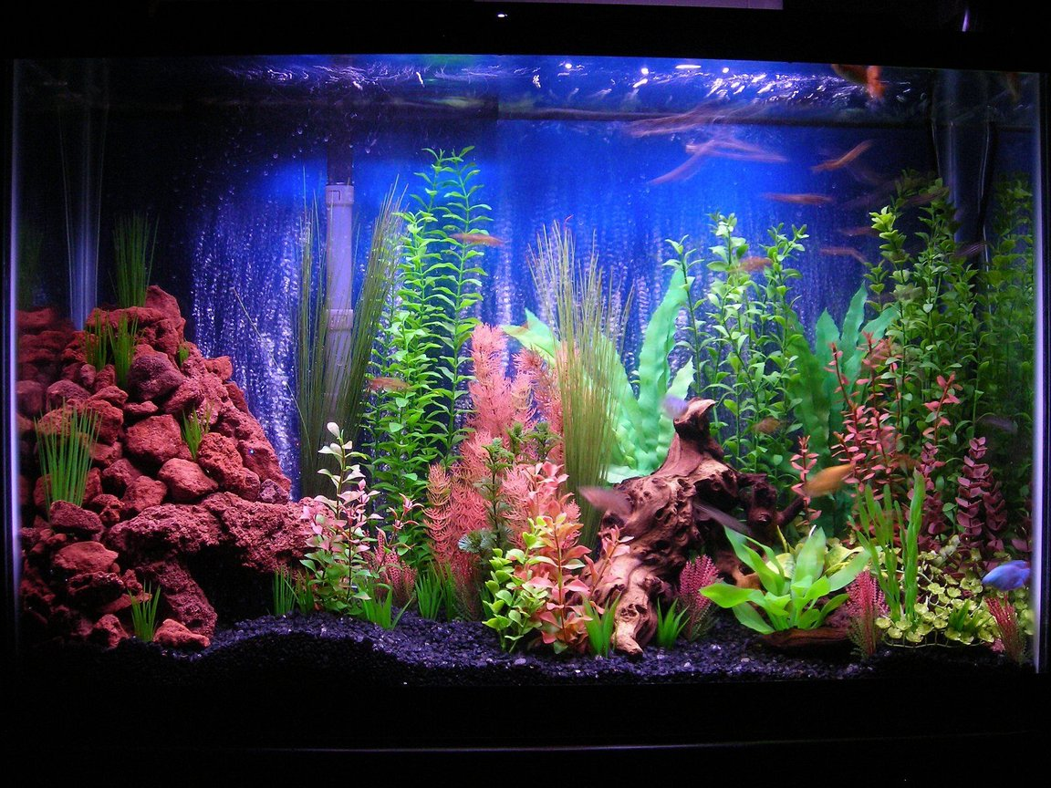 45 gallons freshwater fish tank (mostly fish and non-living decorations) - 45g community, My first tank attempt so comments and suggestions greatly appreciated