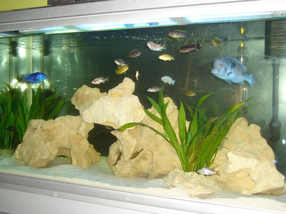 82 gallons freshwater fish tank (mostly fish and non-living decorations) - 4ft African Tank