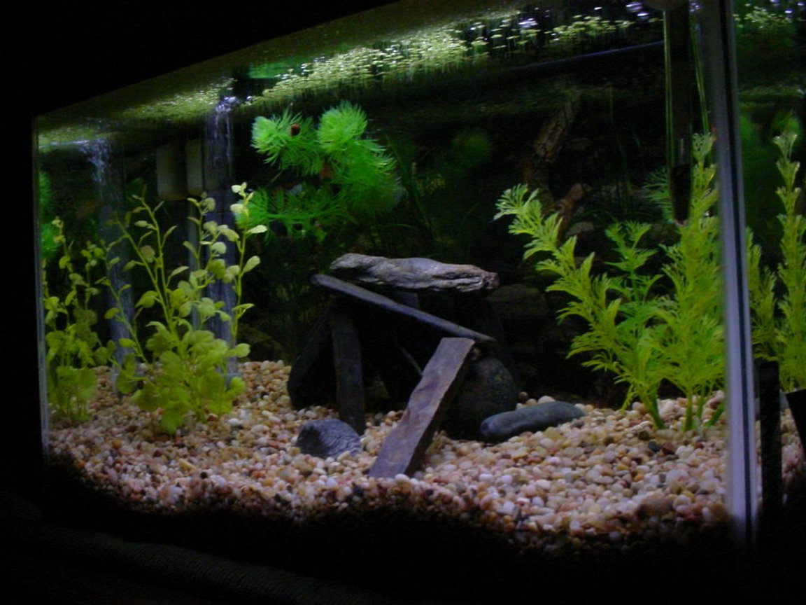 freshwater fish tank (mostly fish and non-living decorations) - My tank as of 12-6-07. I didn't like the ship so i tried to make it look natural by just adding some rocks.