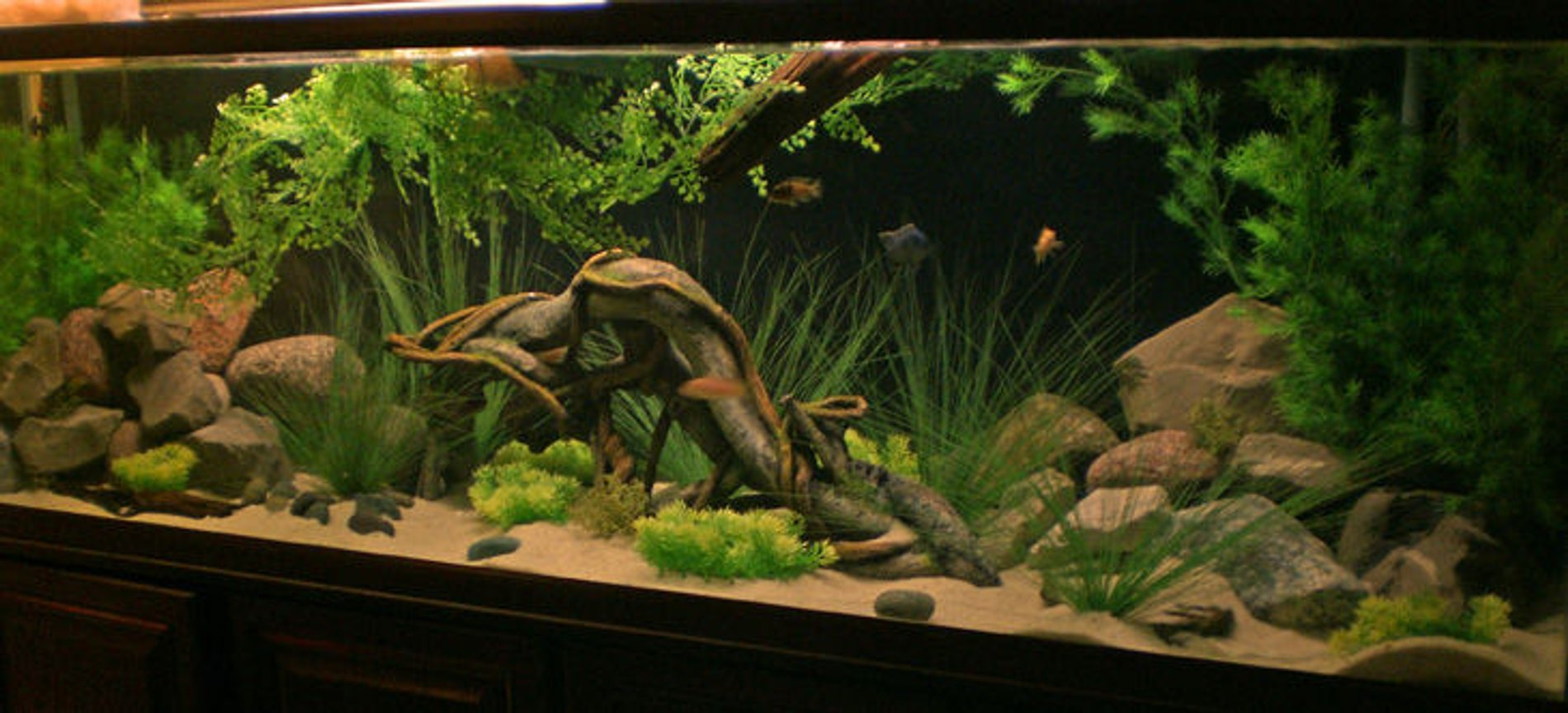 135 gallons freshwater fish tank (mostly fish and non-living decorations) - 135 malawi