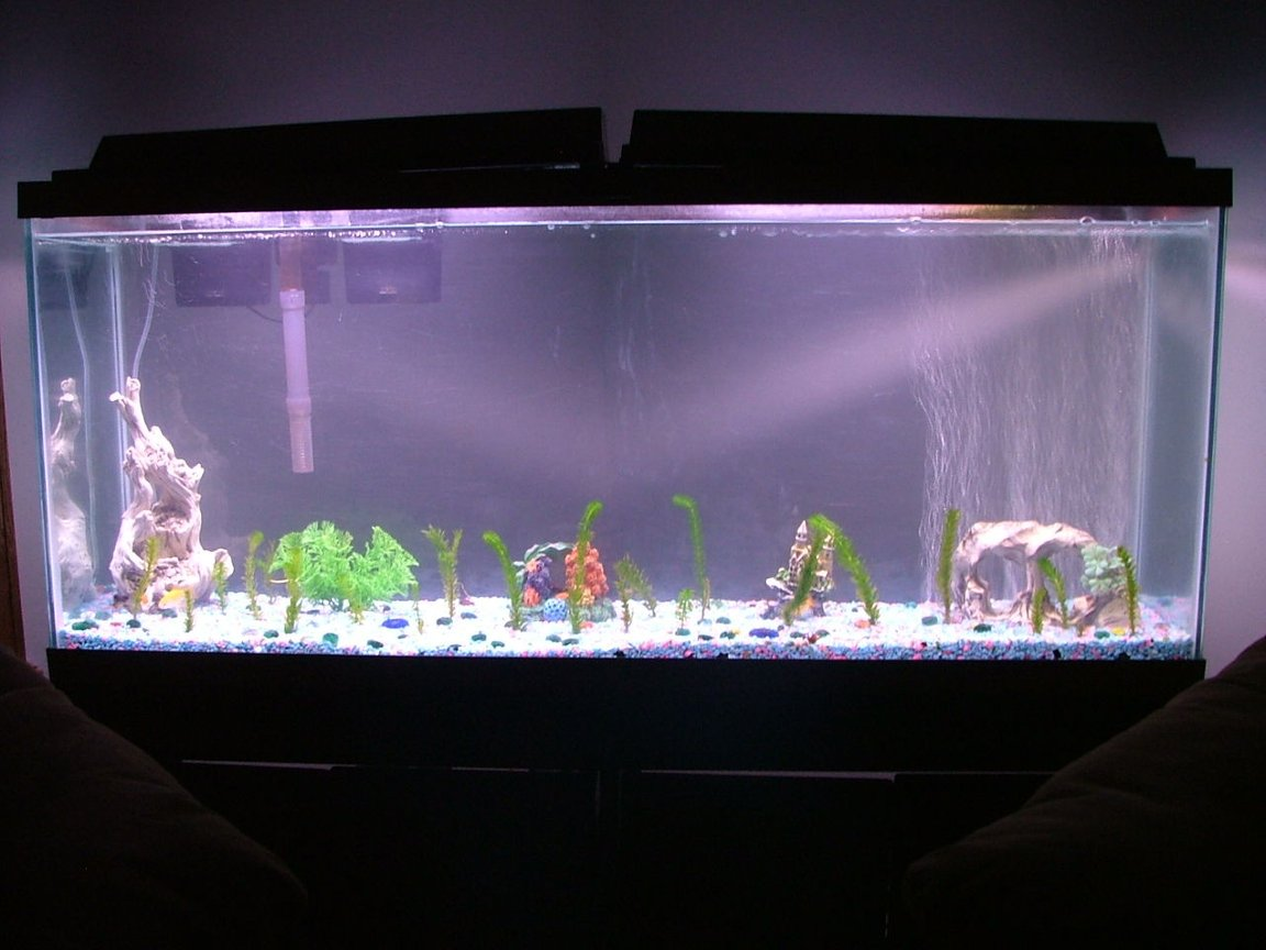55 gallons freshwater fish tank (mostly fish and non-living decorations) - just simple