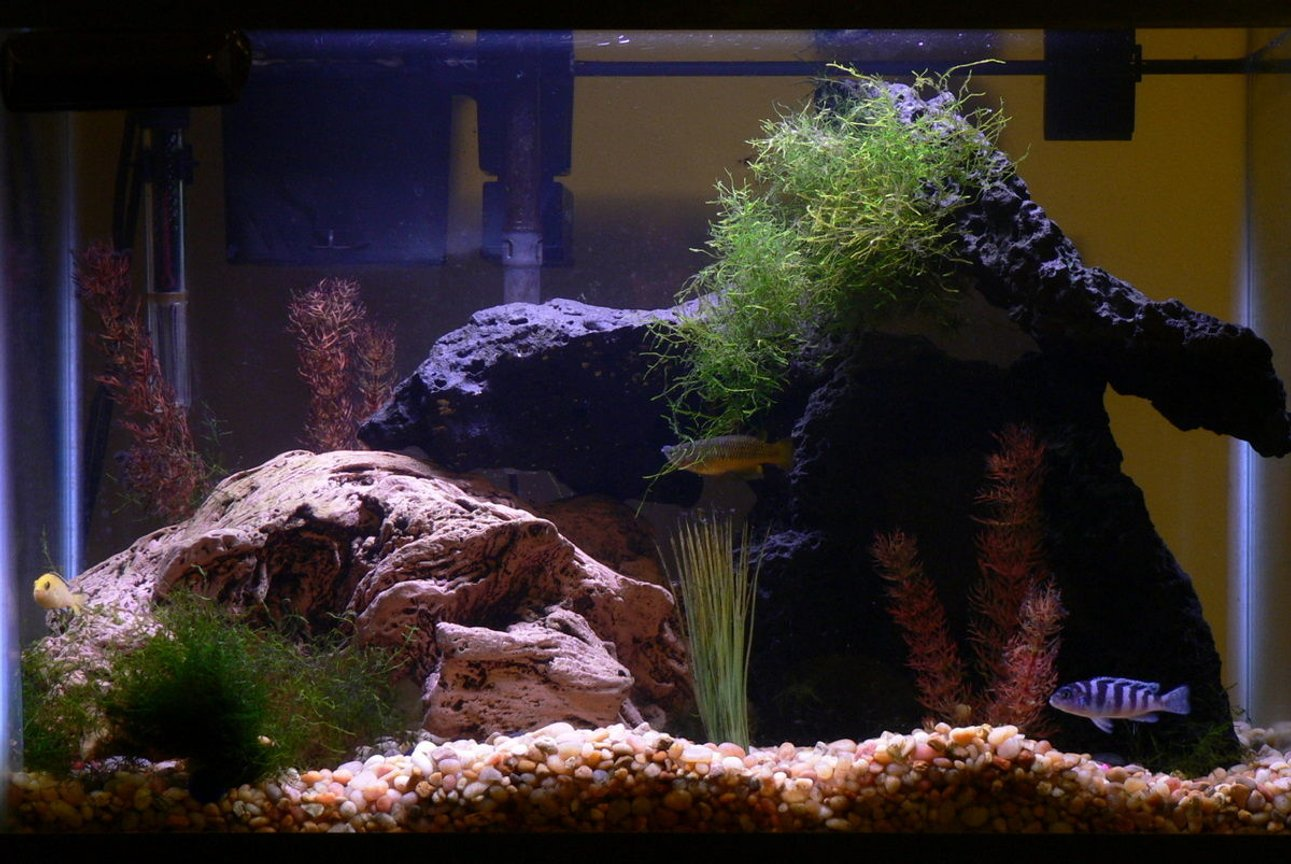 20 gallons freshwater fish tank (mostly fish and non-living decorations) - 20 gal tank with lava rock and (fake) river worn wood. Std fluorescent lighting. Hanging filter. A couple of african cichlids, a big gourami, a peco, catfish and two dwarf puffers. Fake plants and java moss (real)