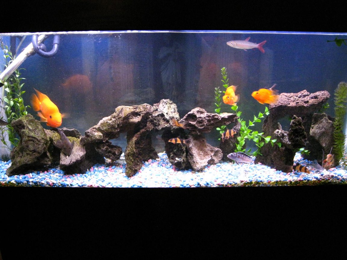 90 gallons freshwater fish tank (mostly fish and non-living decorations) - my 55 gallon