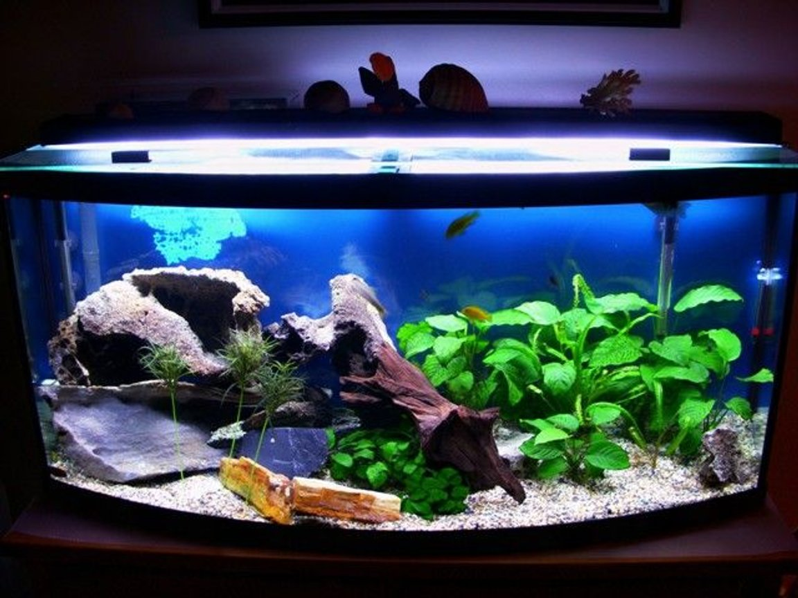 72 gallons freshwater fish tank (mostly fish and non-living decorations) - My second tank, 72 gal bow