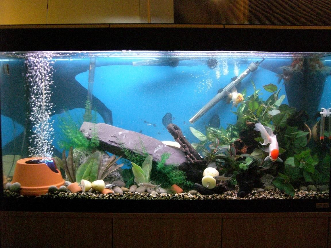50 gallons freshwater fish tank (mostly fish and non-living decorations) - Newly modded tank please vote!