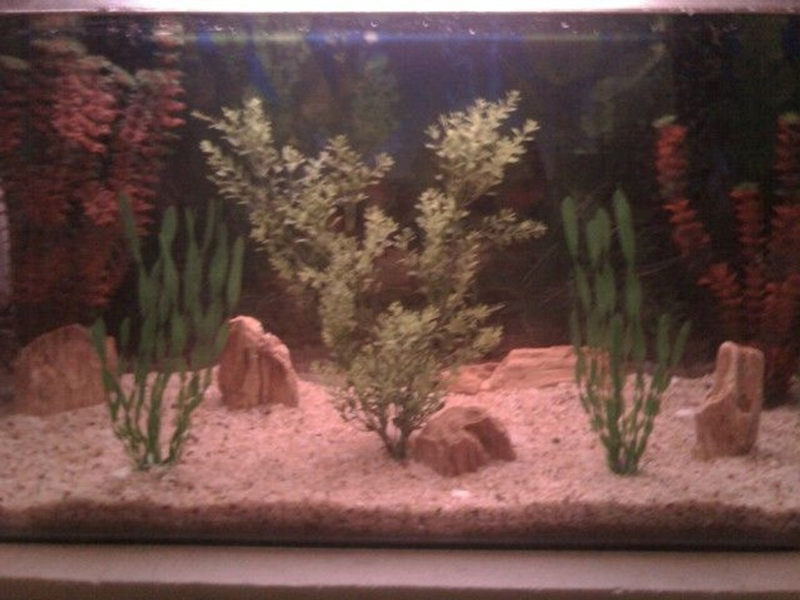 45 gallons freshwater fish tank (mostly fish and non-living decorations) - nothing g8t ......