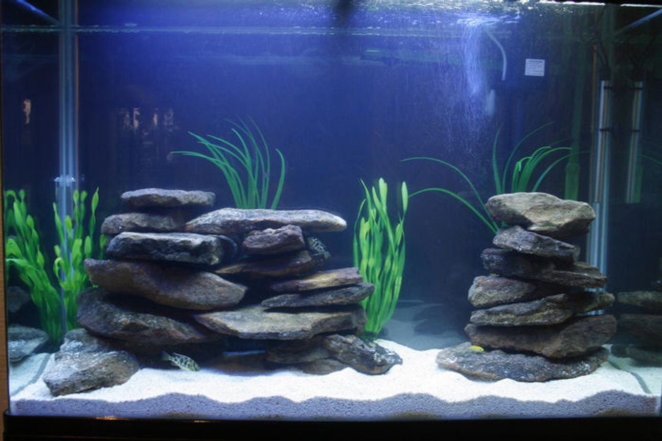 105 gallons freshwater fish tank (mostly fish and non-living decorations) - Aqua Home