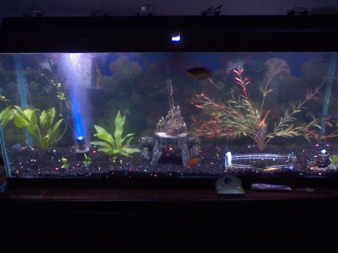 50 gallons freshwater fish tank (mostly fish and non-living decorations) - my 50g freshwater tank