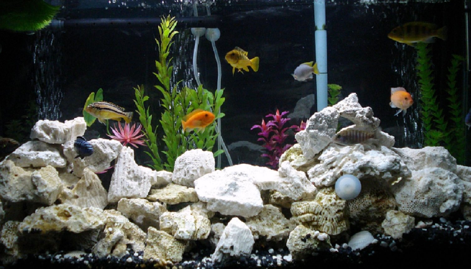 40 gallons freshwater fish tank (mostly fish and non-living decorations) - newest update