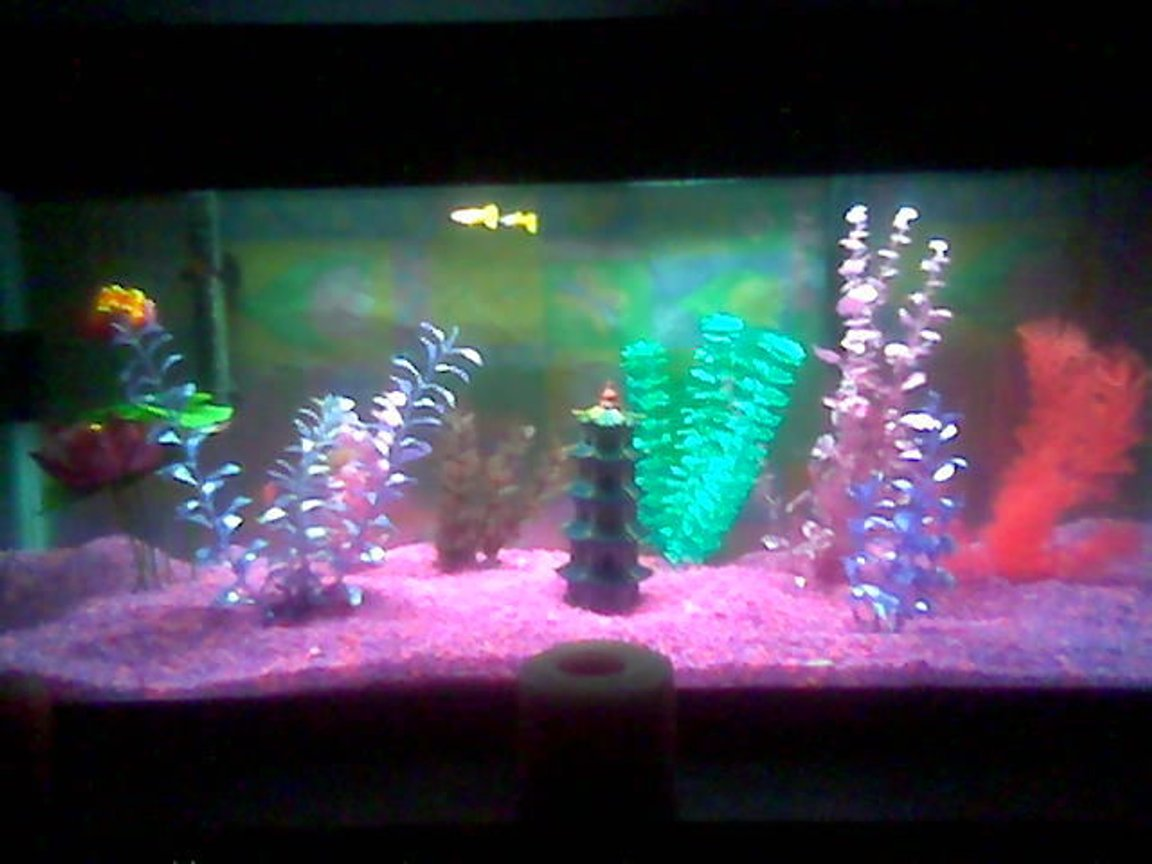 75 gallons freshwater fish tank (mostly fish and non-living decorations) - 20g updated